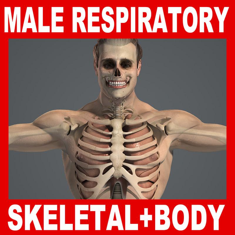 Male_Respiratory_Skeletal_Body_Title.jpg