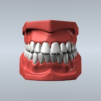 3d model dentist teeth gums modeled