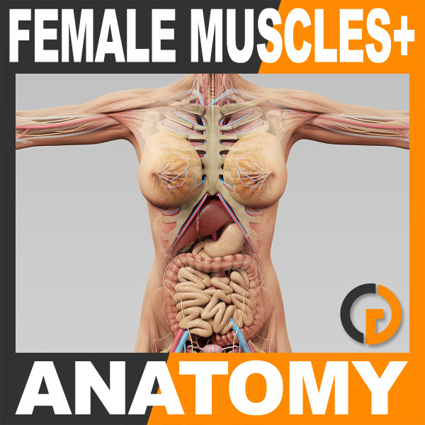 FemaleMuscAnat_th001.jpg