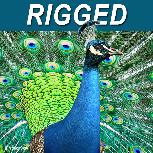 Peacock_A.jpg