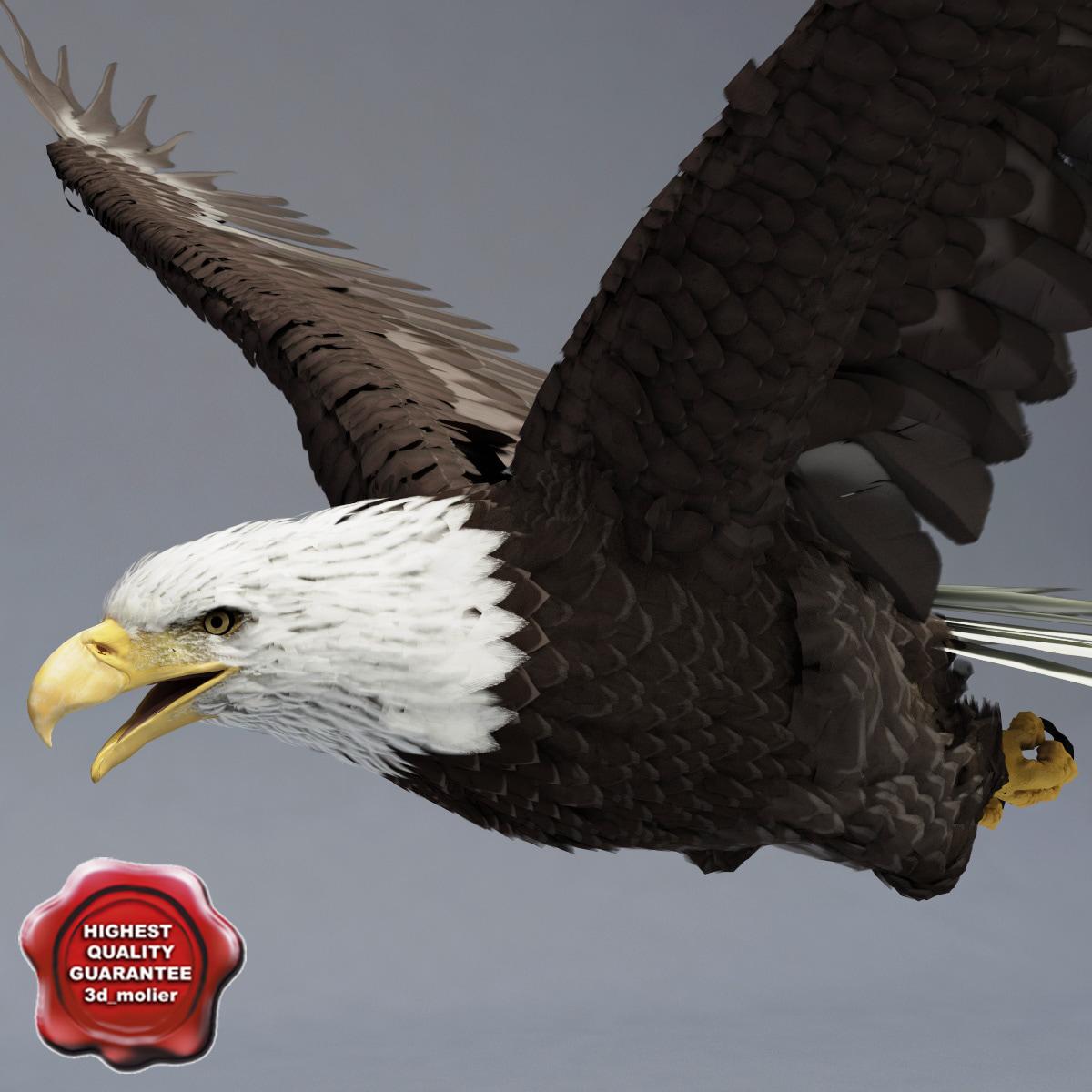 Bald_Eagle_Pose3_00.jpg