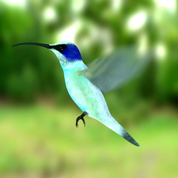 Gallery For &gt Colibri Bird