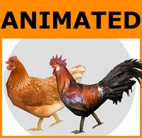 Animated Low Poly Chicken & Rooster