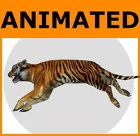 rigged tiger animations 3d model