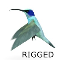 3d model colibri bird rigged