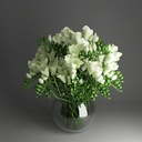 freesia 3D models