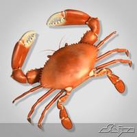 boiled crab 3d max