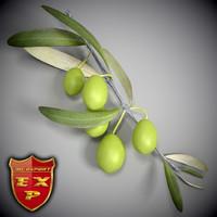 3d olive branch