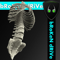 spine with ribs