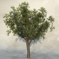 Tree_067