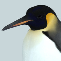3ds max photorealistic penguin