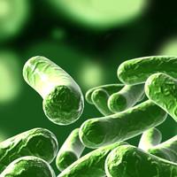 3d bacillus