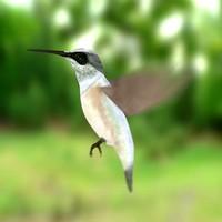 3d model colibri bird