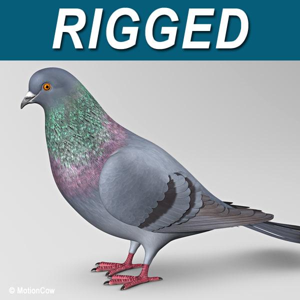Pigeon_A_Fold01.jpg