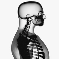 x-ray skeleton xray 3d model