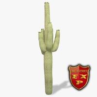 saguaro cactus max