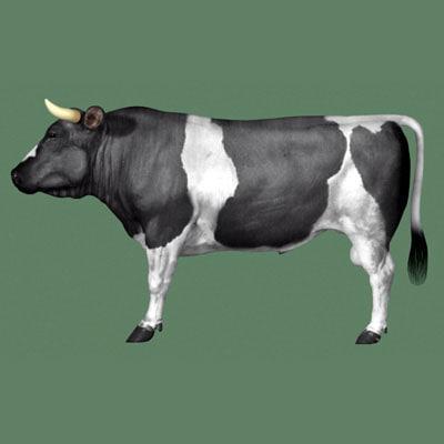 Bull_Sd_400.jpg