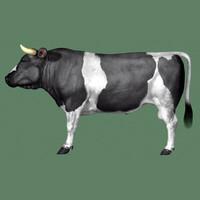 bull 3d 3ds