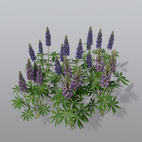 Lupin Bundle
