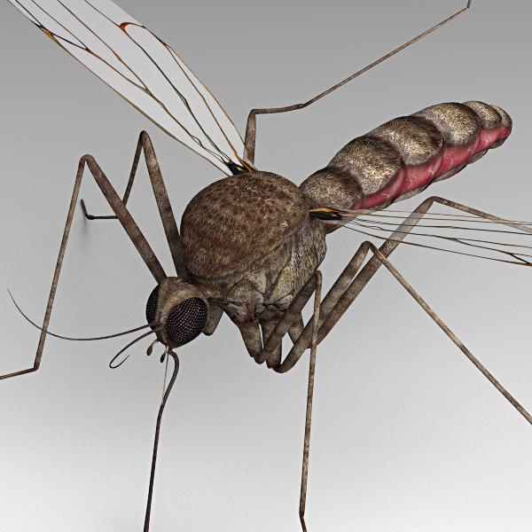 Mosquito_03.jpg