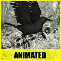crow flying animation 3d model