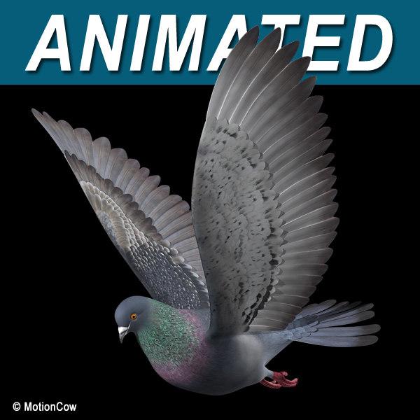 Pigeon_B01.jpg