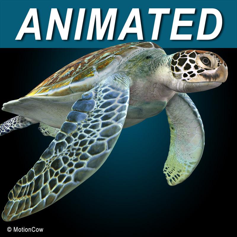Turtle_AA.jpg