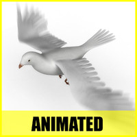 maya dove flying animation