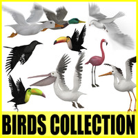 Birds Collection (9 Animated Models)