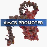 descb promoter 3d model
