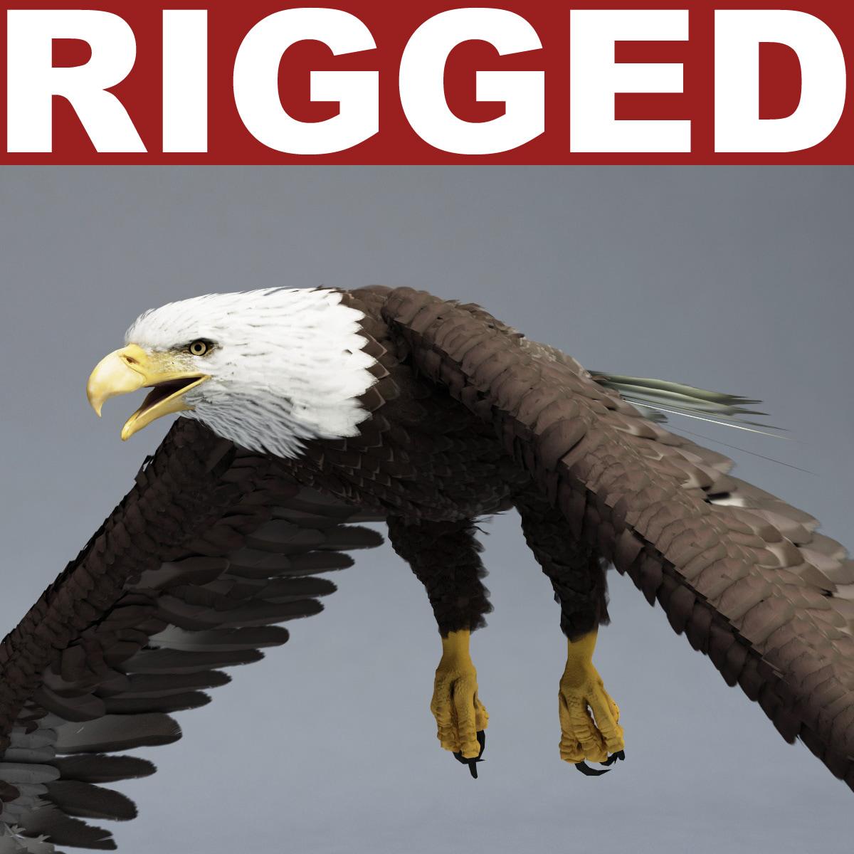 Bald_Eagle_Rigged_00.jpg