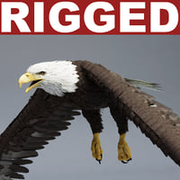 Bald Eagle Rigged
