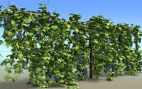 vineyard 3d c4d