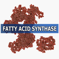 fatty acid synthase max