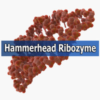 hammerhead ribozyme 3d max
