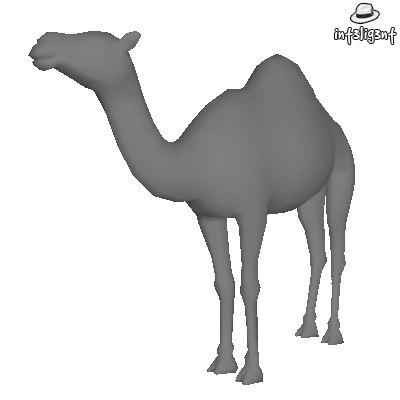 Camel01.jpg