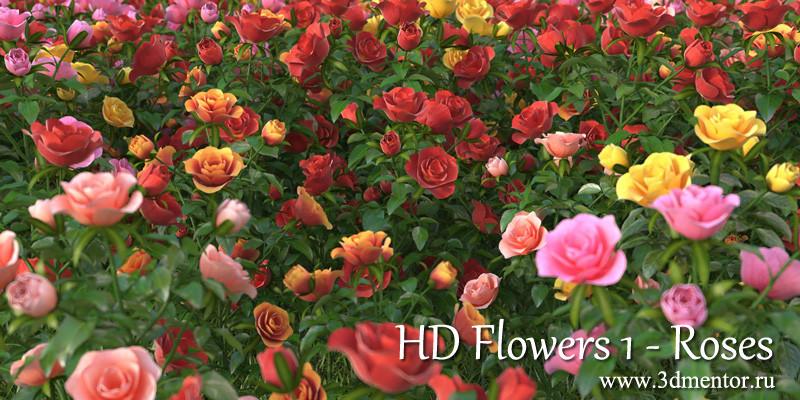 hd_roses_logo_web.jpg