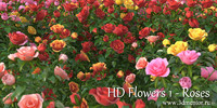 HD Flowers vol.1 Roses