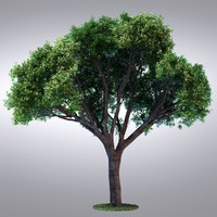 HI Realistic Series Tree - 105