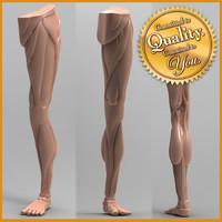 Human Leg Anatomy