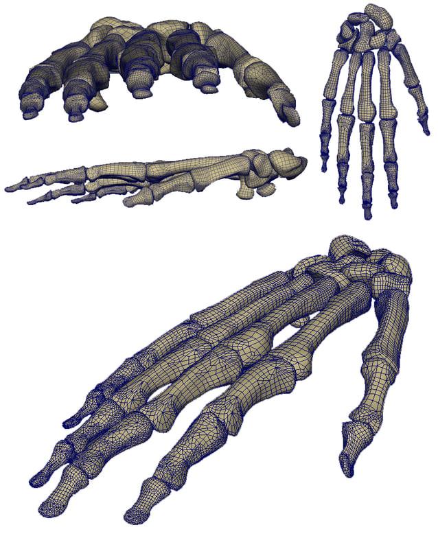 Wireframe_Skeletal_Hand.jpg