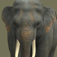 elephant-dg elephant obj