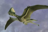 pterosaur 3d obj