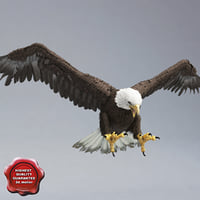 bald eagle pose 4 3d c4d