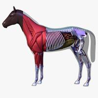 3d model horse anatomy