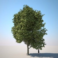 photorealistic chestnut tree hq-vegetation 3d model