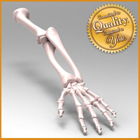 3d model human arm skeleton