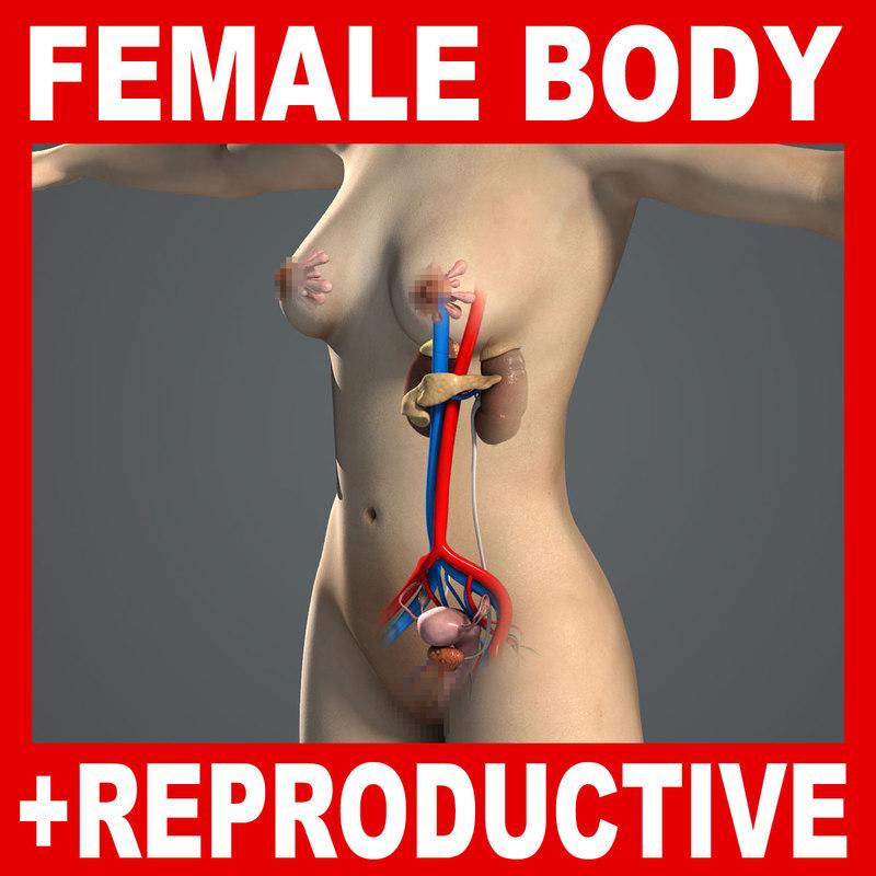 Female_Reproductive_Body_Title.jpg