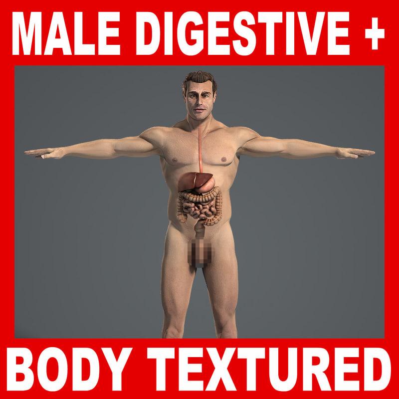 Male_Digestive_Body_Title.jpg