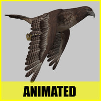 hawk flying animation 3d c4d